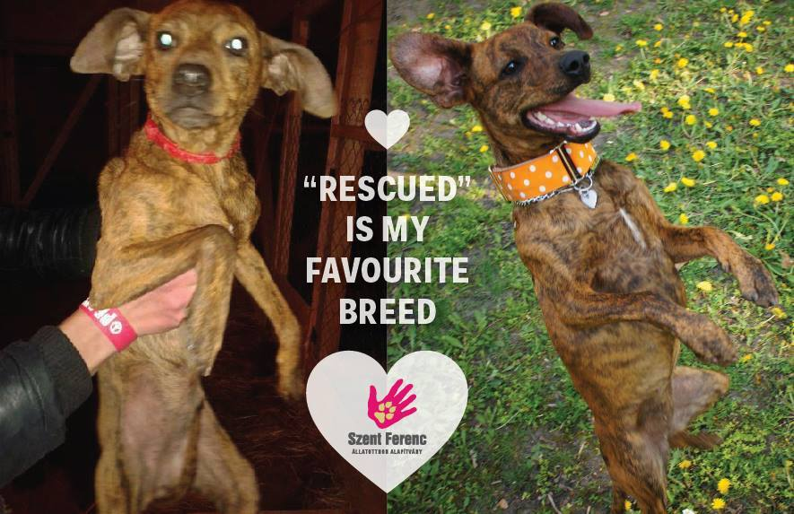 rescued ismyfavbreed