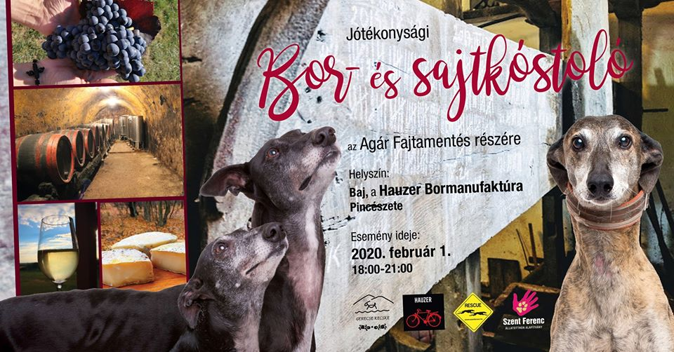 Bor- és sajtkóstolás az Agár Fajtamentés támogatására – 2020.02.01.