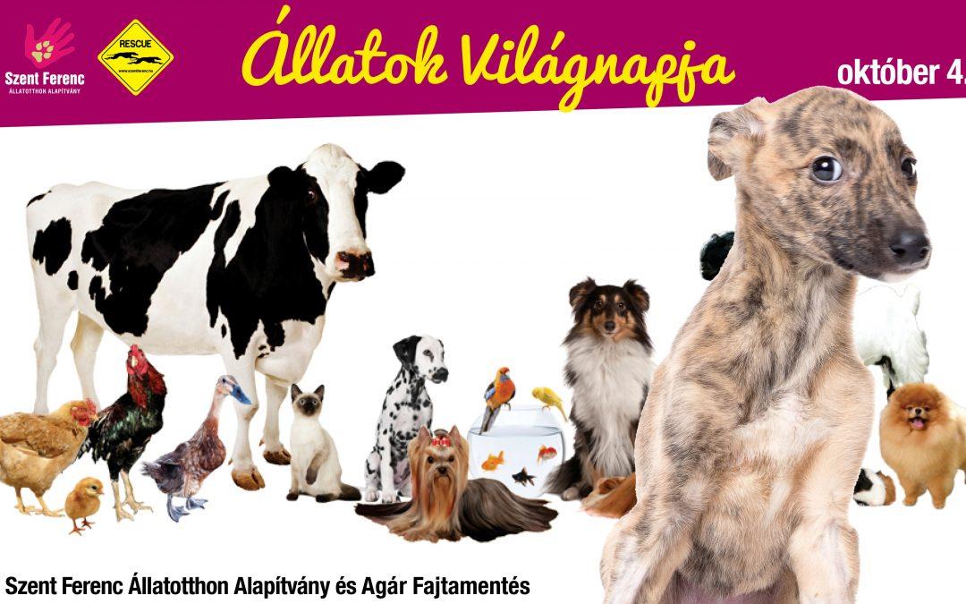 Állatok világnapja – október 4.