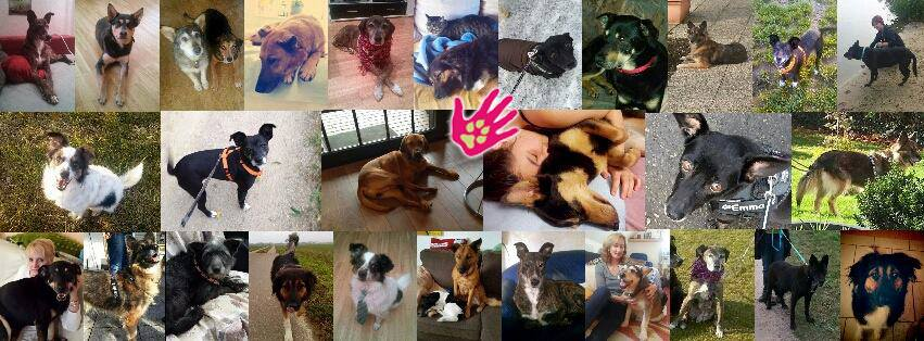 Adoptierte Szent Ferenc Hunde